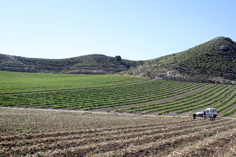 Blick auf ein andalusisches Feld.