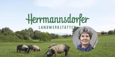 Herrmannsdorfer Weideschweine auf einer Wiese.