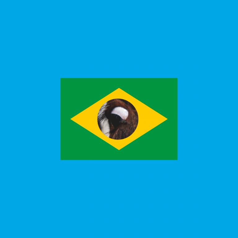 Eine brasilianische Flagge mit einem Kuhauge in der Mitte